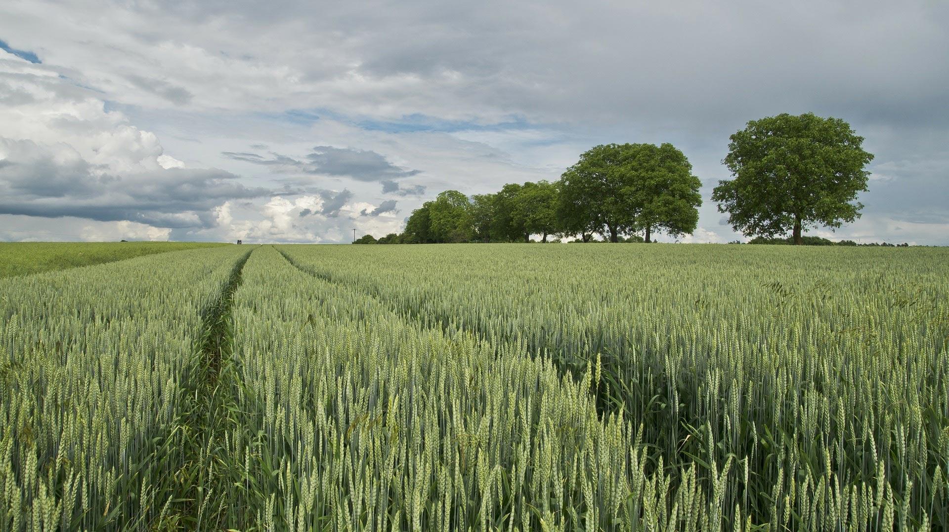 The Sustainable Procurement Pledge turns one