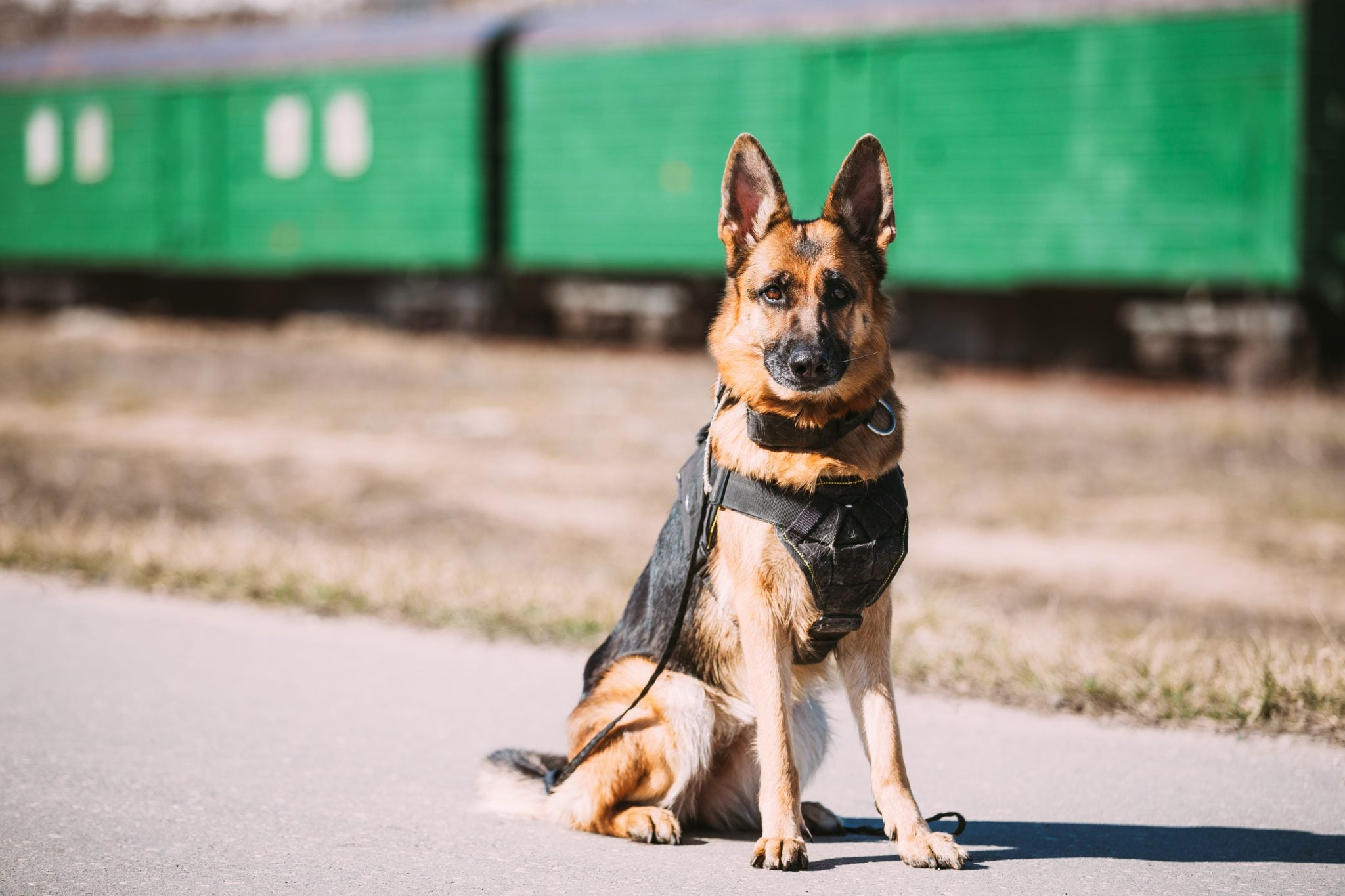 Top Government Contractors Providing Working Dogs and Related Services