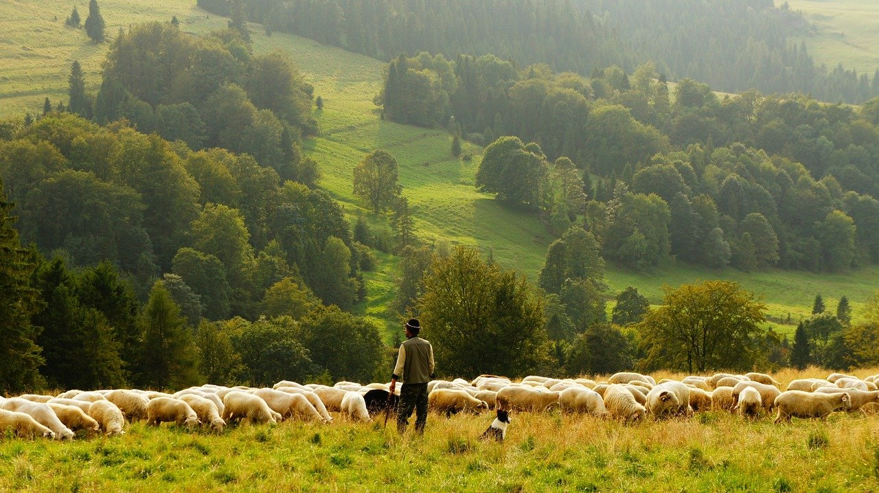 European Commission presents actions to boost organic production
