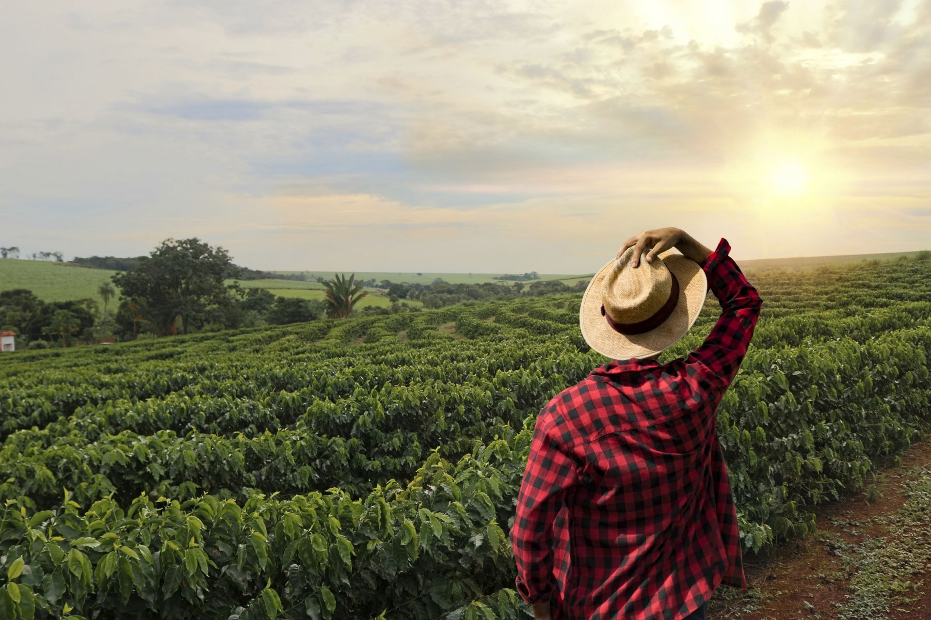 Digital Moses: Helping Farmers Benefit From Digitization in the African Valley