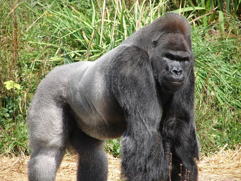 Public Procurement and Government Contracting – The 800 Pound Gorilla in the Room