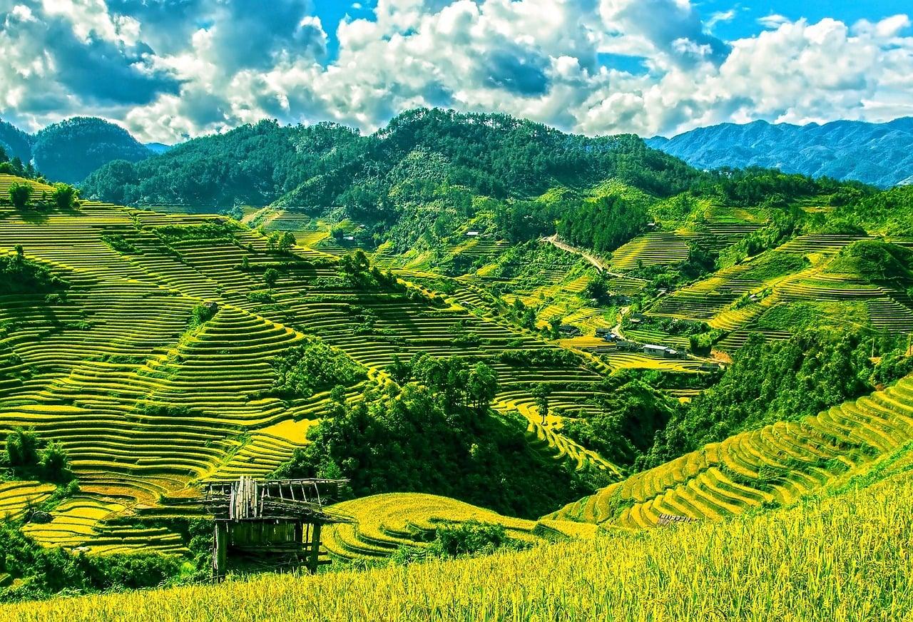 Vietnam To Open Public Procurement Market